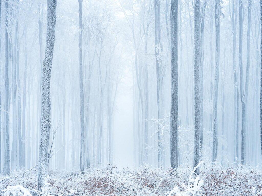 peter podpera landscape photography winter frozen trees austria lr 1061637